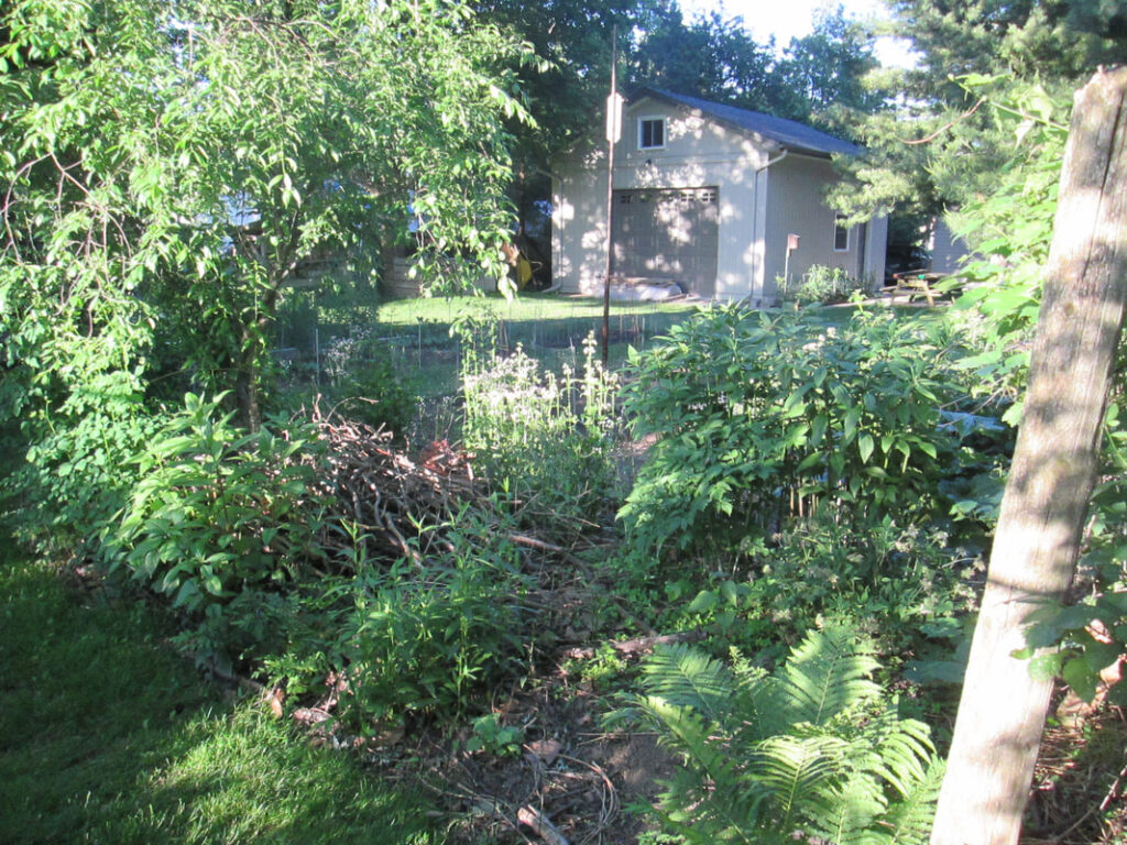 a shot of the Lindeman / Price garden, showing the back yard and brush pile